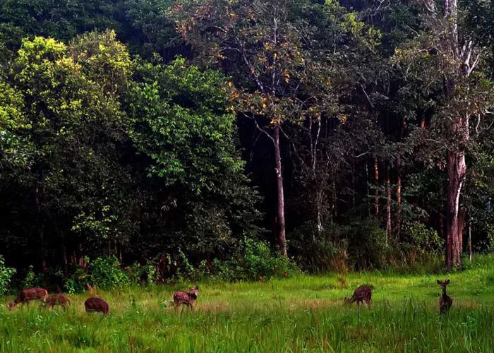 wayanad-jungle-trails-journey-uncrushedleaves